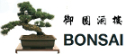 chinees restaurant Bonsai